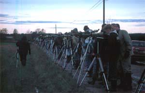 Äänekoski Liimattala 27. 5. 1996. Edellispäivänä löytynyt ylänkökiuru kokosi aamuvarhaisella toistasataa bongaria peltotien varteen. Tauno Hiekkanen